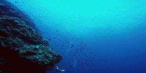 海水の酸性度上昇で貝やサンゴが消える
