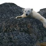 北極海の氷が消えていく・・